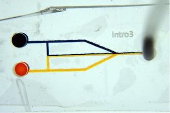 A microfluidic device illustrates laminar flow