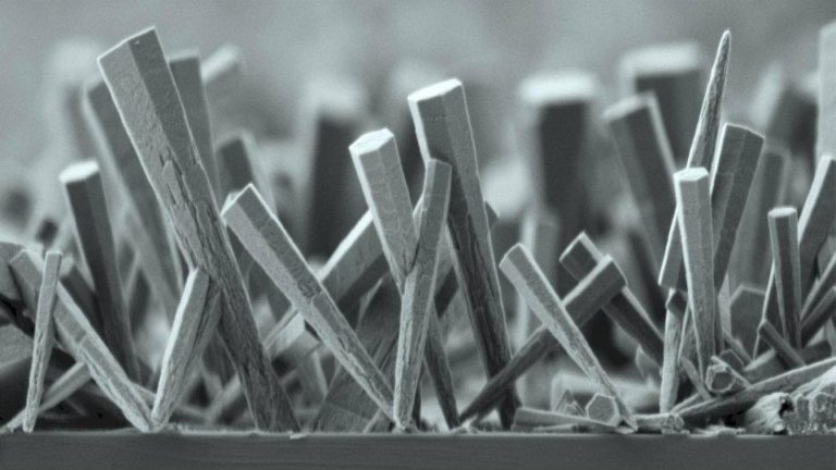 Nickel nanowires growing on a surface, as seen through a scanning electron microscope