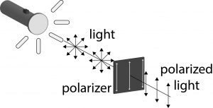 Light from a flashlight is polarized as it passes through a polarizer